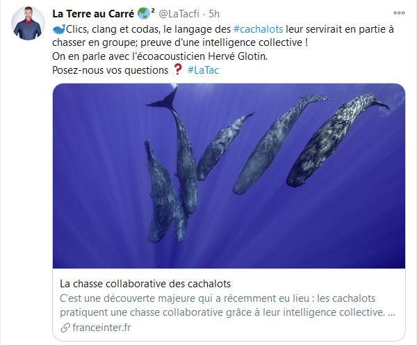 La Terre au carré - La chasse collaborative des cachalots